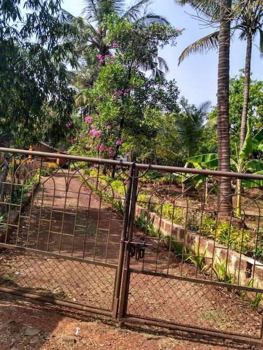 Pathway Leading to Gokul