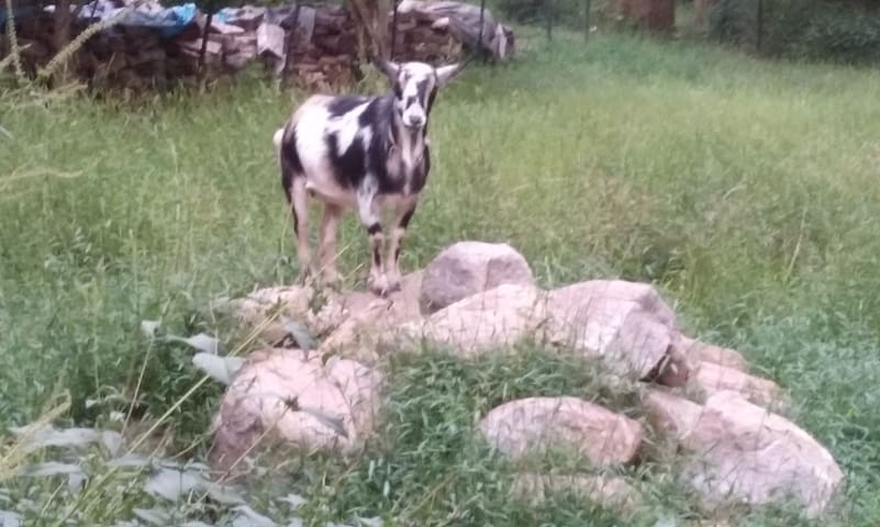 Come say hello to our sweet goat! But please don't feed her without permission and always wash your hands after petting her.