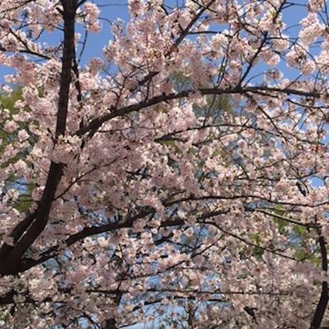満開の桜・・・