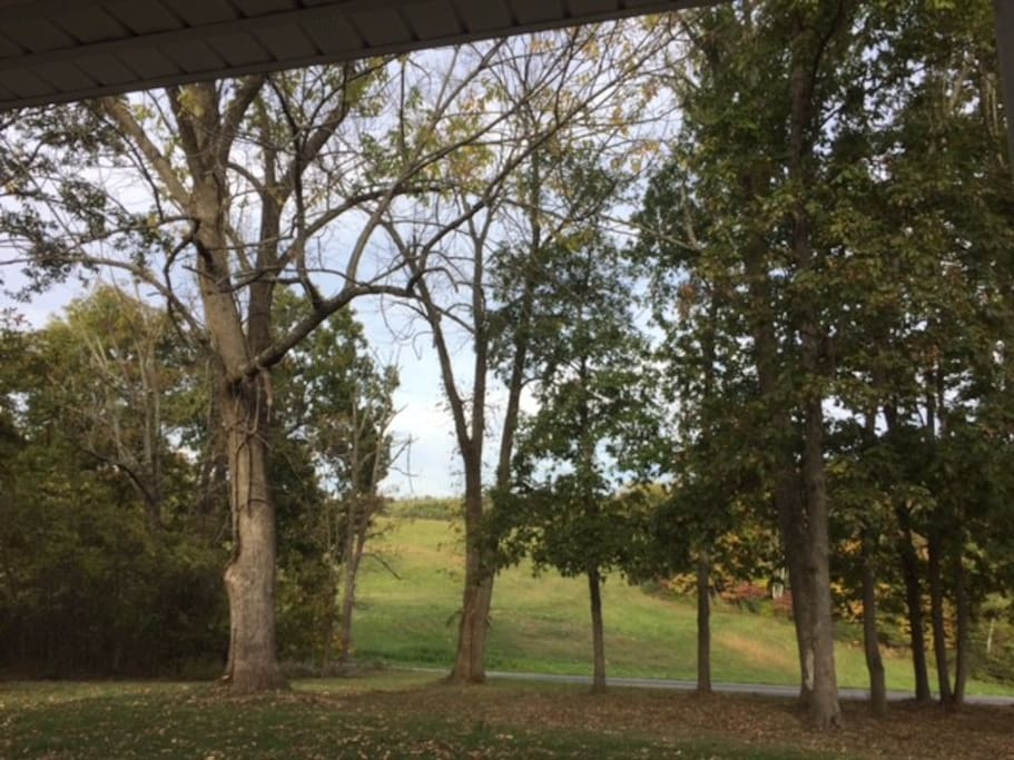 View from front porch swing
