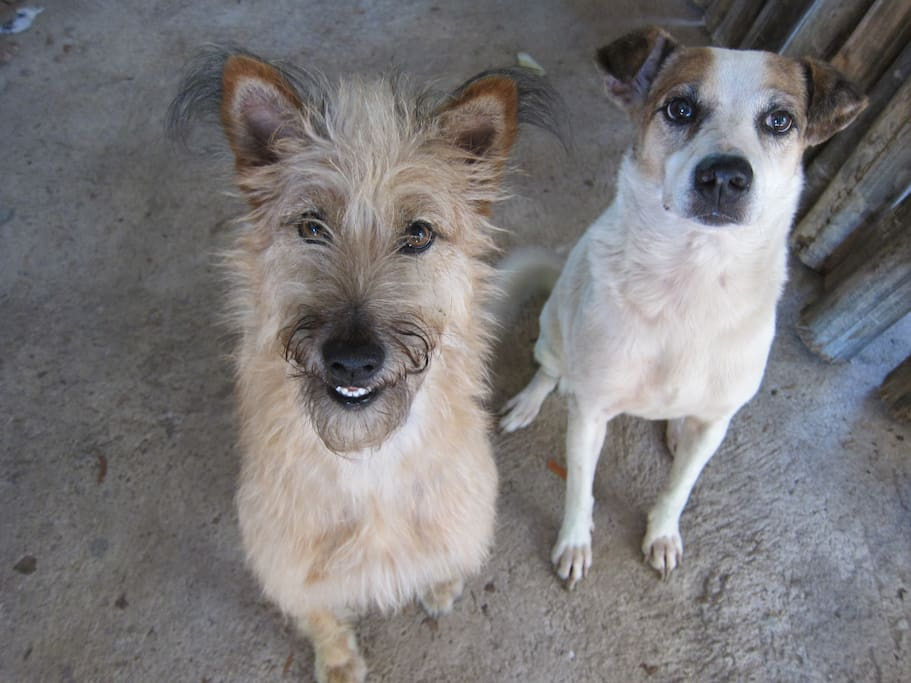 Our two pets Pomphui and Browny
