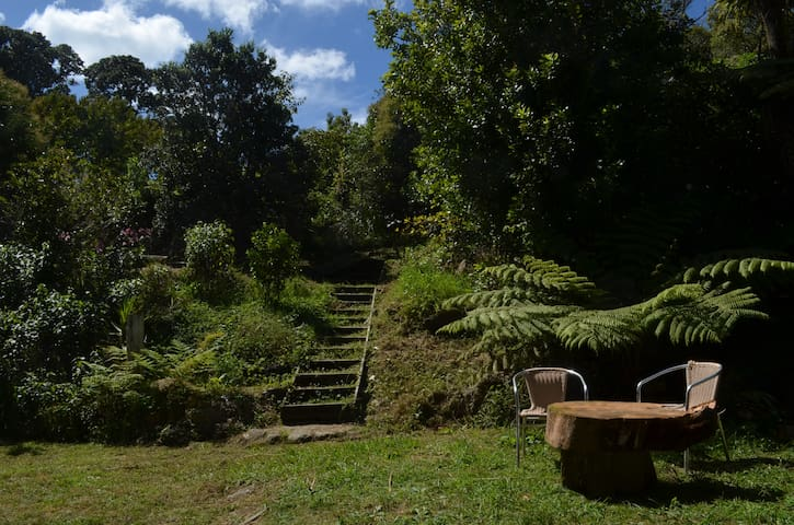 Pine House in secluded bush retreat - Coromandel - Mökki