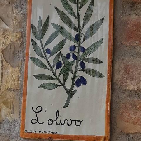 Casa Vacanze Sant'Andrea Olivo