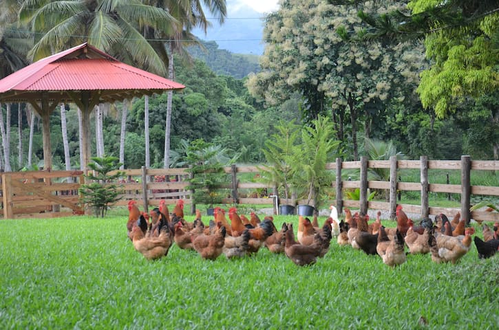 Ecolodge Farm for Nature Lovers