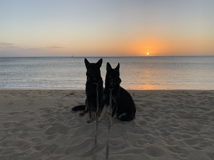 Dog-Friendly Beachfront Family Getaway, Western PR