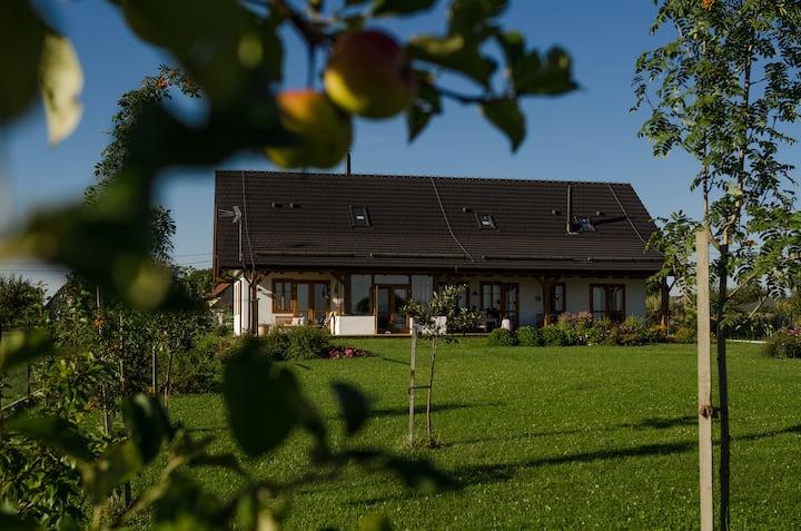 Zelený pokoj - Penzion V Poli