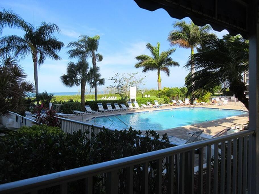 Palm Tree, Tree, Jacuzzi, Tub, Pool