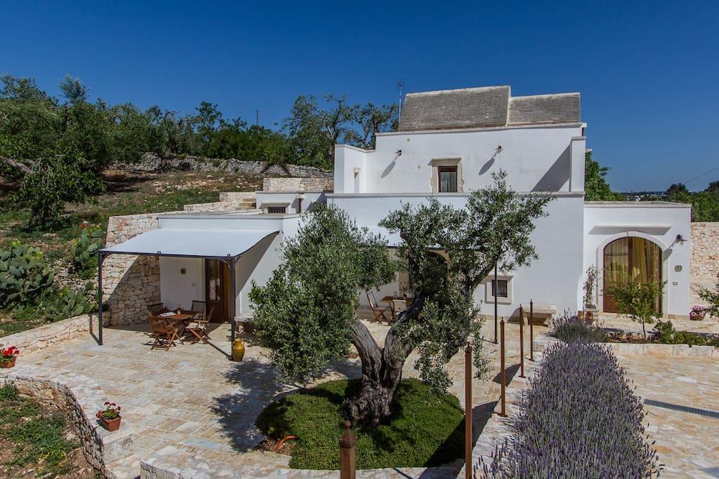 Masseria in uliveto con piscina cil appartamenti in - Masseria in puglia con piscina ...