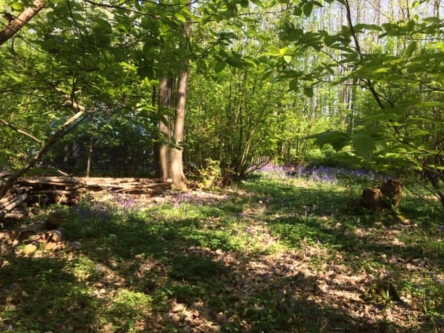 Wild Camping in ancient woodland. Nr Canterbury