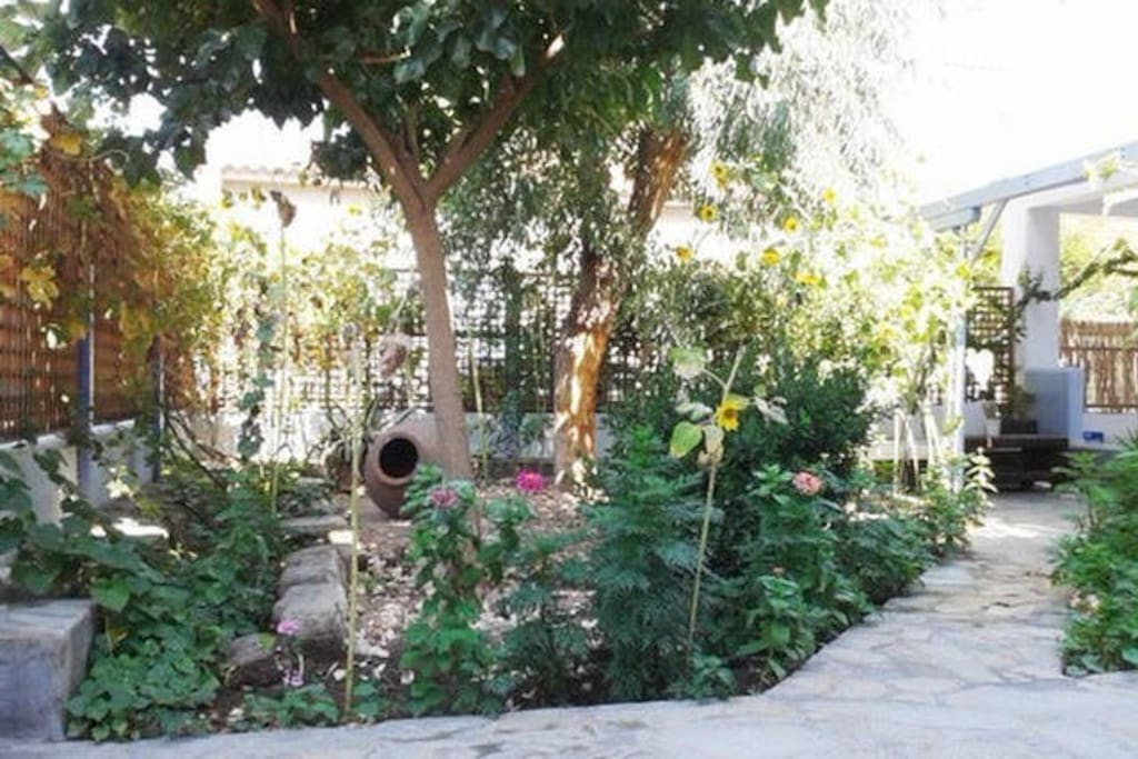 Beautiful Garden with mulberry tree