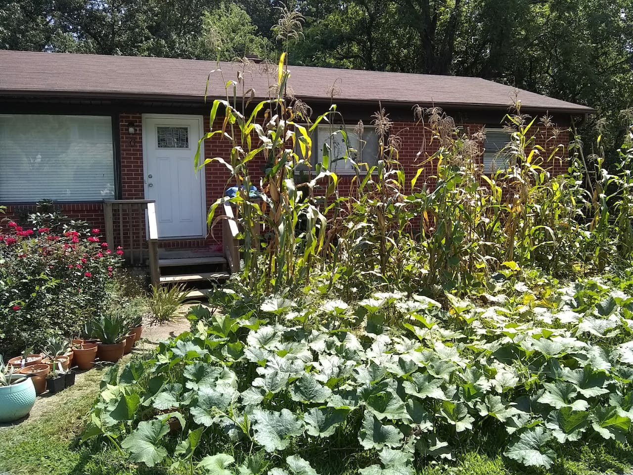 The front of the house with the hosts' garden.