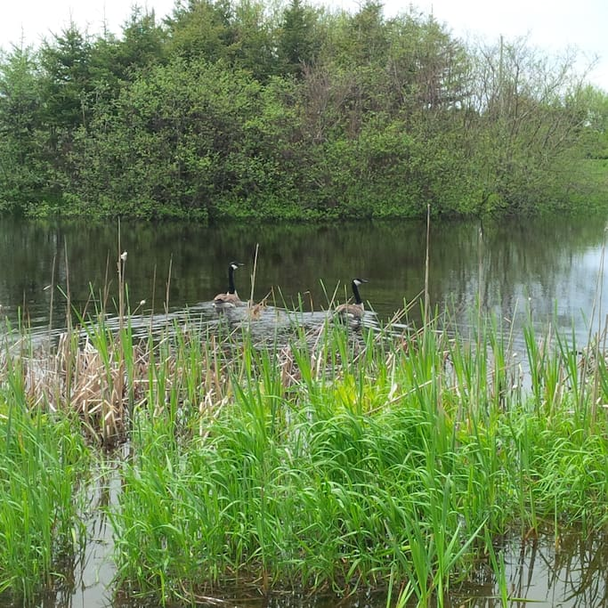 The five acres feature calming ponds and peaceful surroundings.