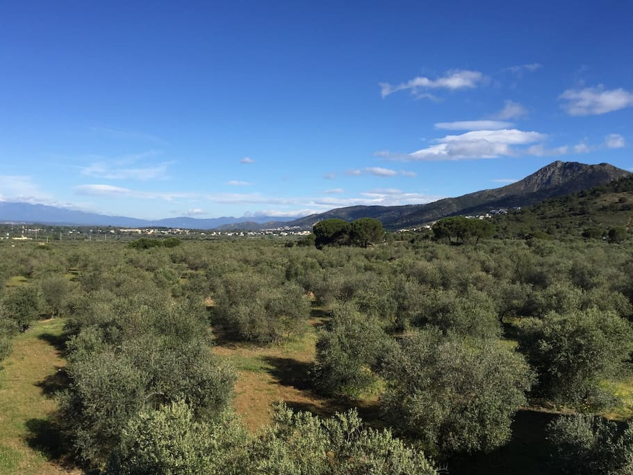 Terrasse - Vue montagnes et oliveraie.