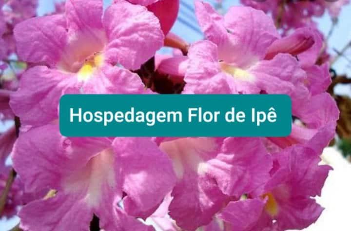 Hospedagem  Flor De Ipê