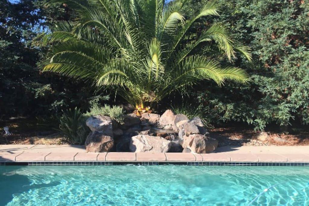 Luxurious swimming pool and peaceful backyard.