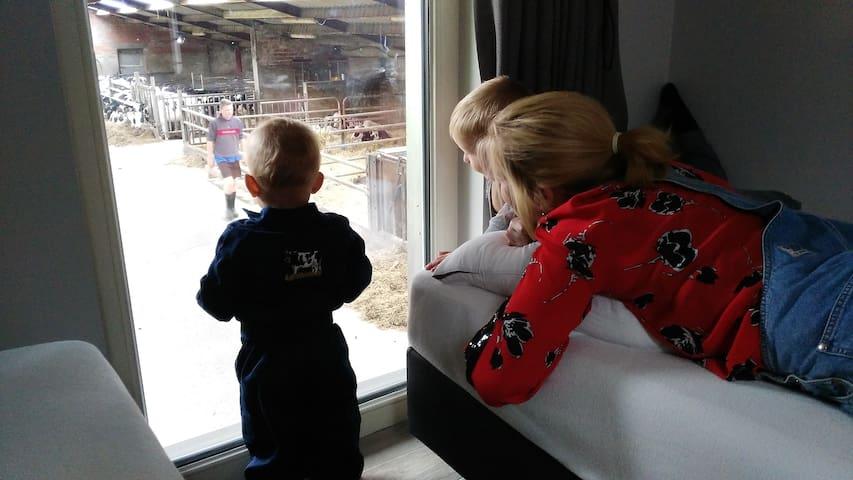 De Drieshoeve: slapen met zicht op de koeien.