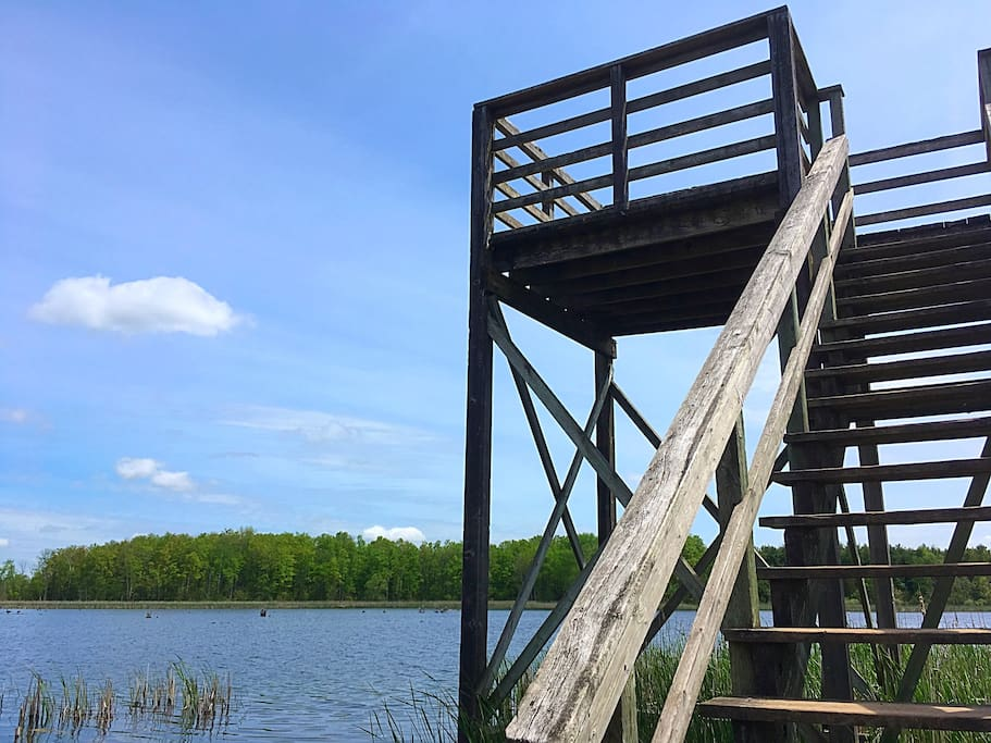 Climb the observation tower for a stunning view of the surrounding forests and lake