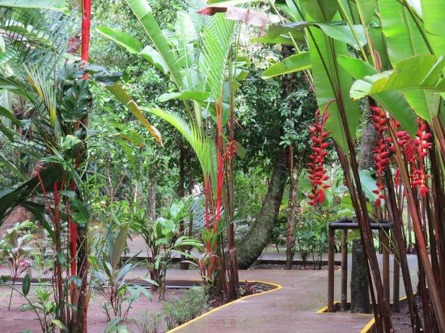 Beautiful tropical flowers line the pathways