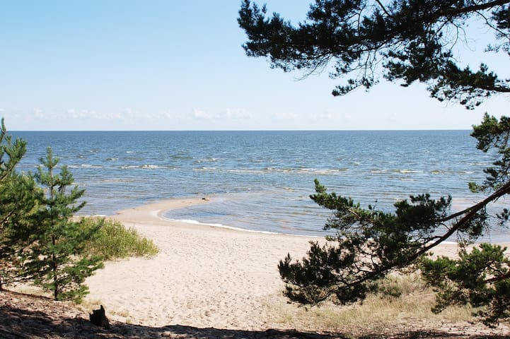 Отдых на берегу Чудского озера.