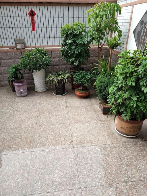 可供观赏的绿色植被。