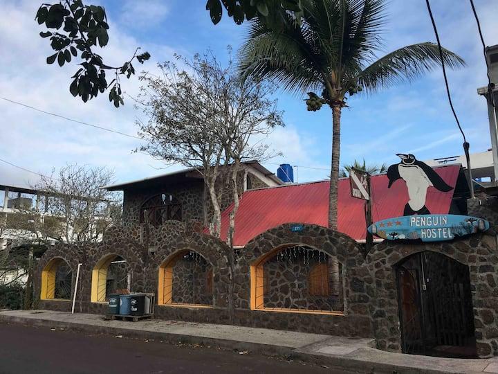 Penguin Hostel Puerto Ayora
