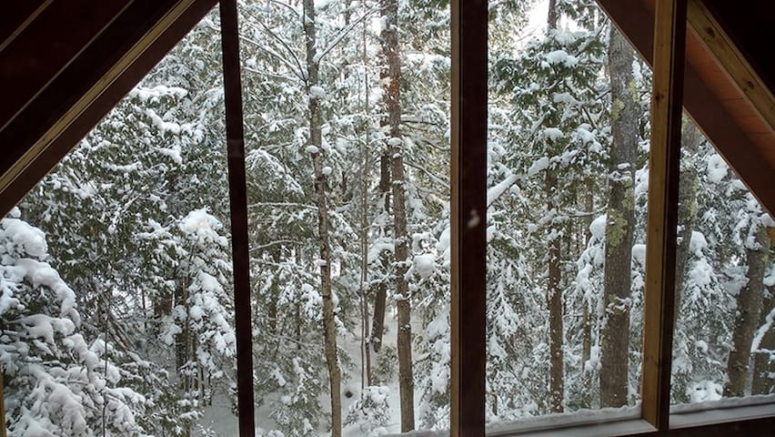 Boreal Forest Retreat - Bayfield - Cabin