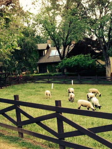 Amazing Deal! Welcome to the Thunder Ridge Ranch