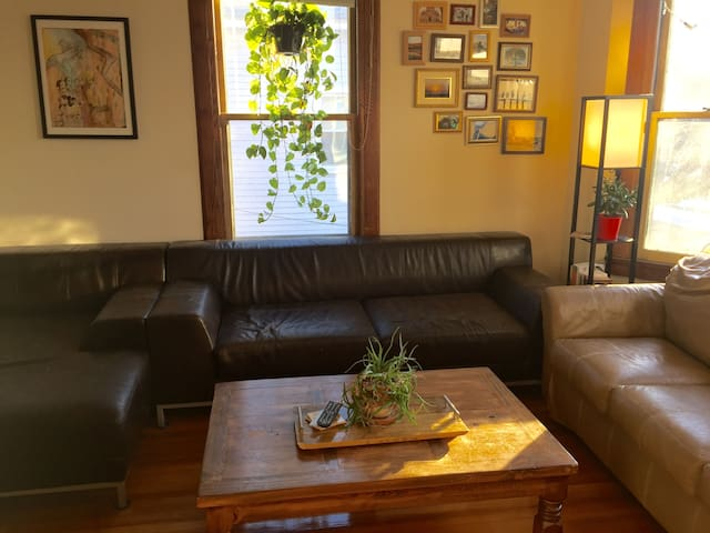 Large, sunny apartment on Yale shuttle - New Haven