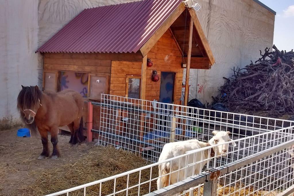 Casa chalet la terola orito villas en alquiler en - Casas prefabricadas monforte del cid ...