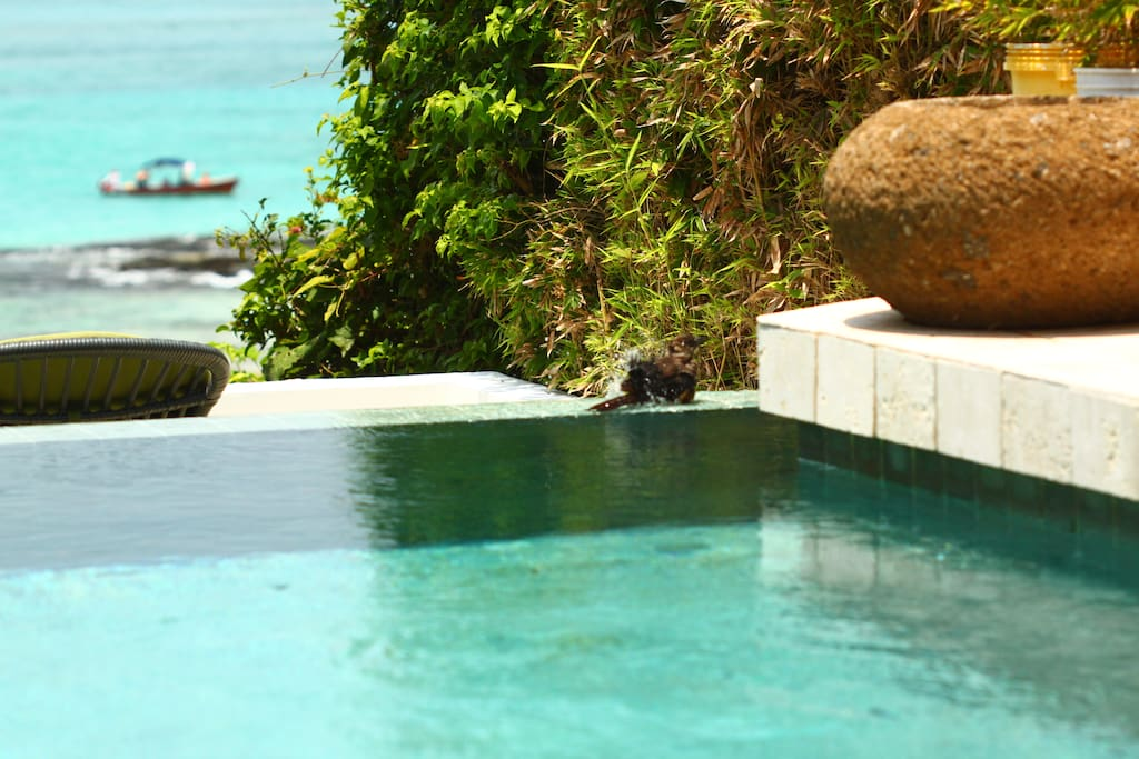 the pool in front of the romantic terrace for two and the beach.