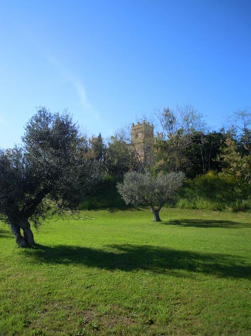 Olive grove Martinetti Bianchi