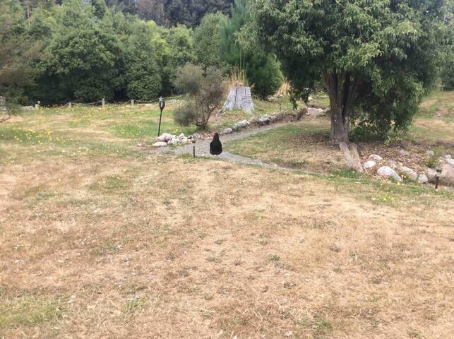 Freestone Hillside Cabin #3