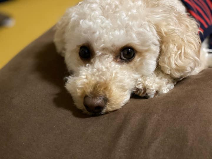 看板犬が迎えるシェアハウス①「かの:KANO」