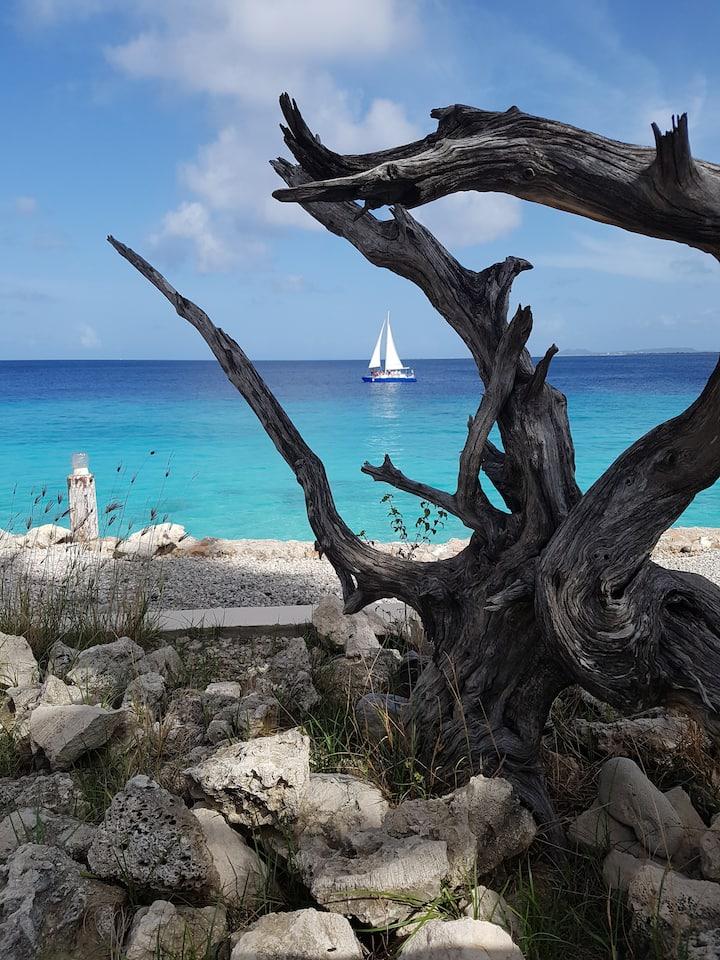 Tropical Oceanview | privé kamer