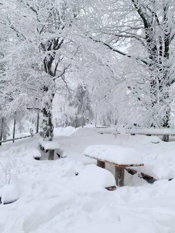 Zima na Równicy ( styczeń 2019)