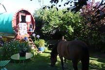 Second sitting area. The pony is not a permanent resident.