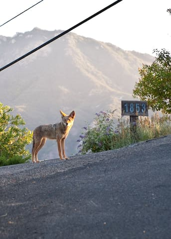 Curious coyotes photo by James Armstrong