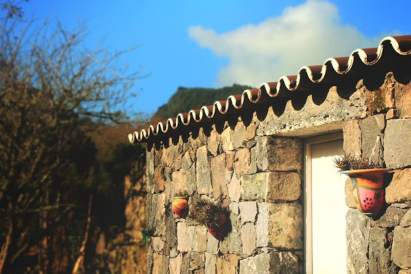 Garden's view - traditional  azorean stone wall.