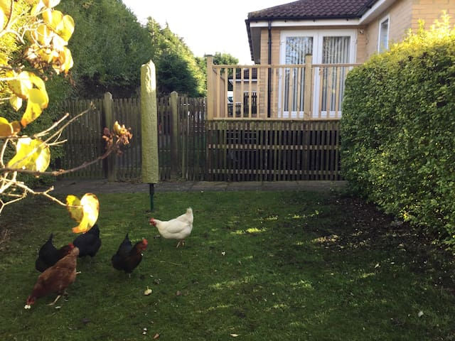 Private decking area,  our hens provide guests with fresh eggs
