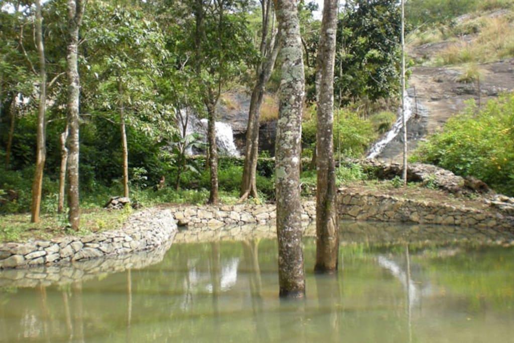 Pond, waterfalls, trees