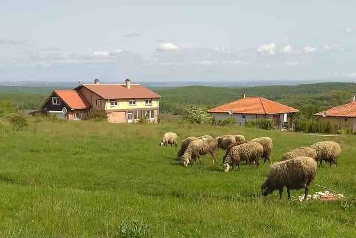 Country paradise near Karadere coast