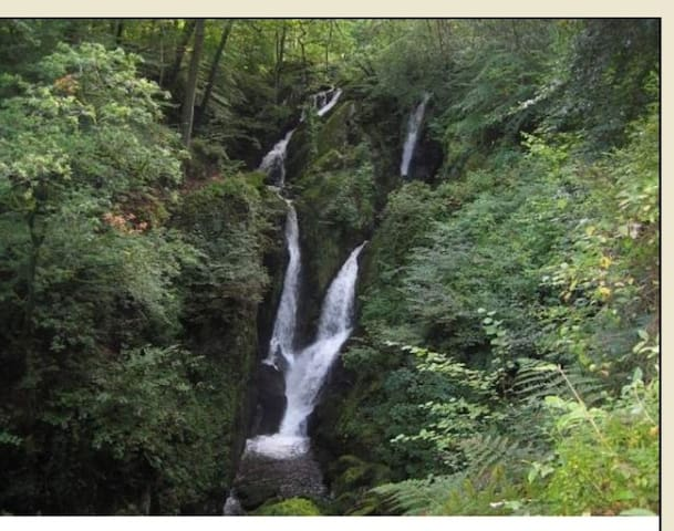 A short walk from the centre ofAmbleside, a short stroll away from my home, leads to Stock Ghyll Force, a spectacular 70 foot waterfall which may be viewed safely from a railed viewpoint. In spring the area under the trees is a carpet of daffodils.
