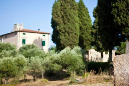 Villa porquier - Poggio Al Tesoro - Vila