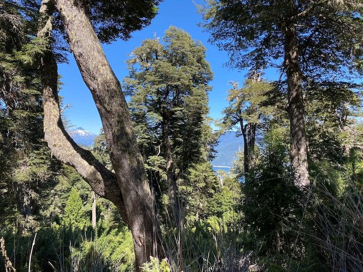 Domo Nativo del Bosque - Lago Tinquilco-Huerquehue