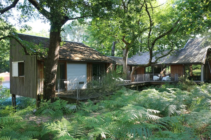 Maisons d'architecte en bois s/ pilotis (Golf)