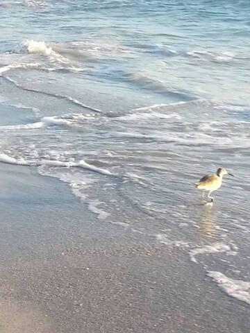 BEACH  CONDO IN TREASURE ISLAND FLORIDA