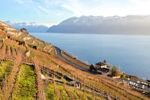 The house is located in Vevey in the picturesque UNESCO Lavaux region. If guests have time, they should have a hike on the lake or in the wineyard.