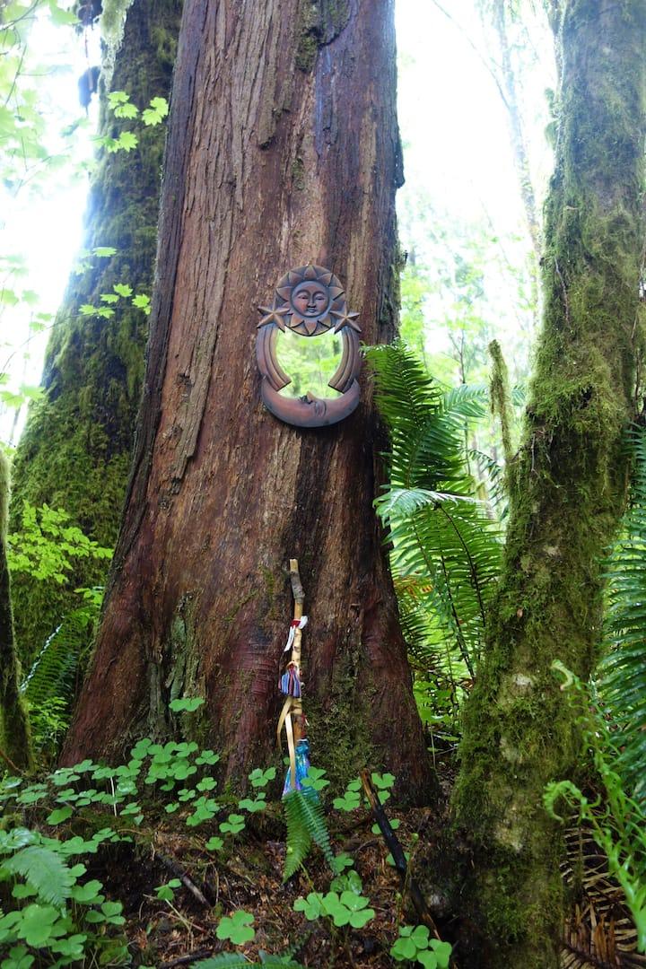 Magic Cedar Tree