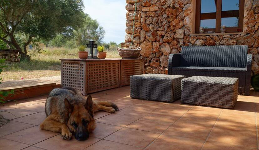 "Rural property ""Chez Bea"" for one person + pet - Sineu"