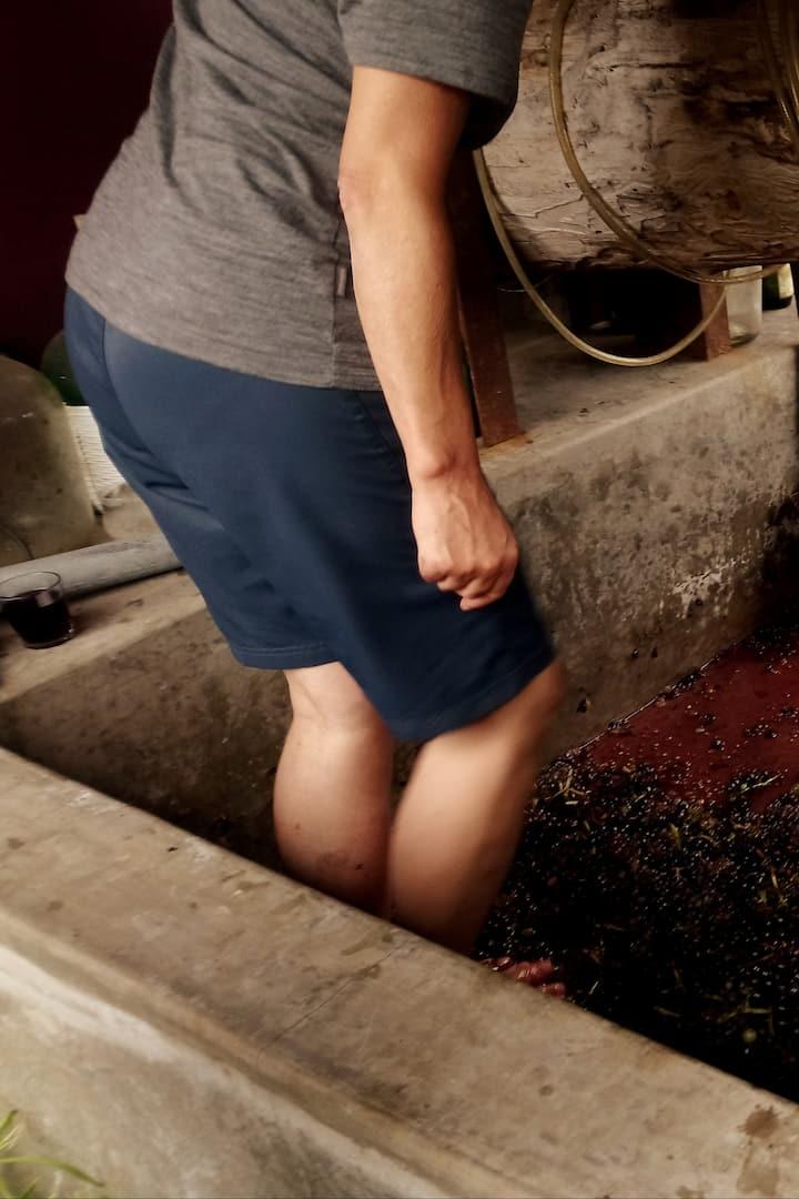 Mês de setembro a fazer o nosso vinho